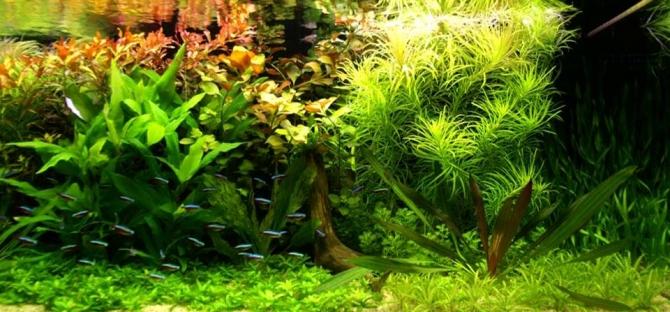 Aquarium Startseite